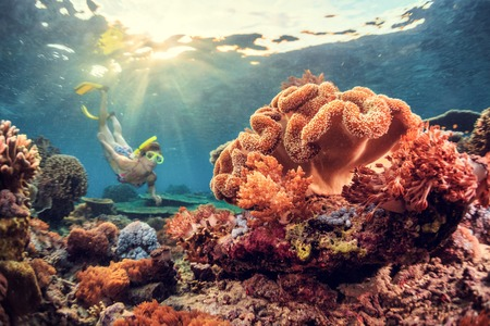 Photo for Young lady snorkeling over coral reef in the tropical sea. Bali island - Royalty Free Image