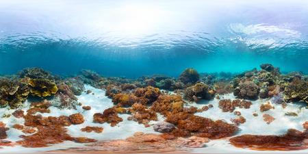 Foto de Spherical, 360 degrees, seamless panorama of the sea floor with corals - Imagen libre de derechos