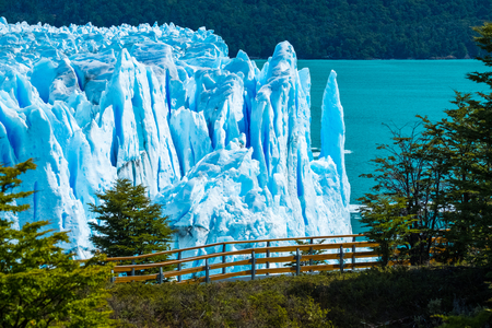Photo for Perito Moreno glacier with trees, Argentina - Royalty Free Image