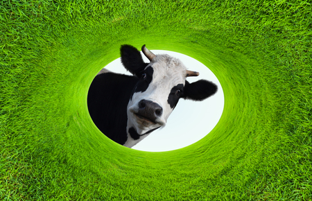 Photo for Happy smiling cow in a natural green grass ellipse frame - Royalty Free Image