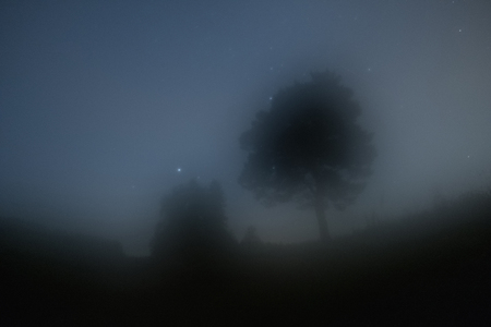 Photo for Two trees in the morning haze and starry sky - Royalty Free Image