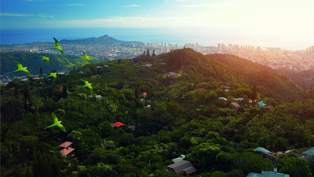 Foto de Flock of parrots fly over the green tropical forest with city of Honolulu on the background. The island of Oahu, Hawaii - Imagen libre de derechos