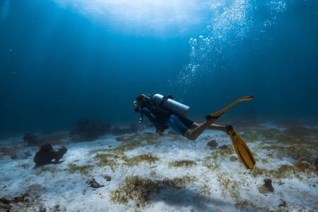 Photo for Woman scuba diver swims alone underwater over the sea bottom covered with a sea weed - Royalty Free Image