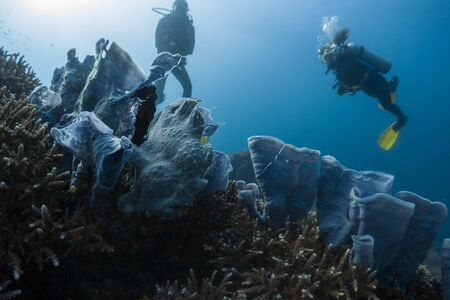 Photo for Divers spotted and watch the frogfish hidden among the corals in the tropical sea in Philippines - Royalty Free Image