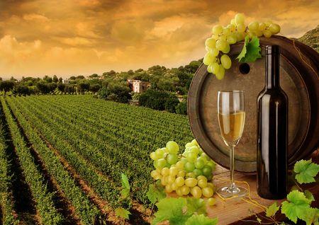 Photo pour Wine and vineyard in sunset  - image libre de droit
