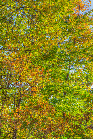 Photo for Colorful leafes in an autumn forest scenery - Royalty Free Image