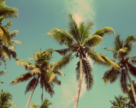 Photo pour branches of coconut palms under blue sky - vintage retro style - image libre de droit