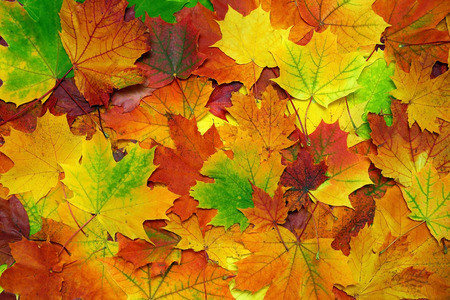 Foto de background with autumn colorful leaves - Imagen libre de derechos