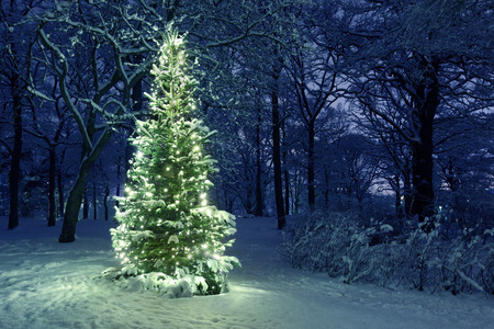 Photo pour Christmas Tree in Snow - image libre de droit