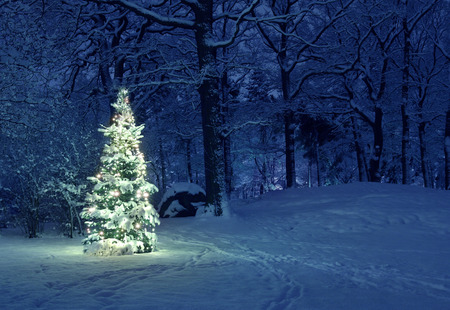 Photo for Christmas Tree in Snow - Royalty Free Image