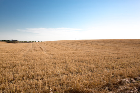 Photo pour Harvest field background at sunset - image libre de droit