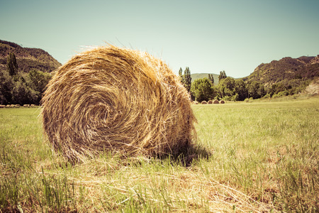 Photo pour Wheat field after harvest / Straw bales - image libre de droit