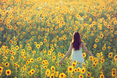Photo for Young woman walking away in a field of sunflowers, view from her back; copy space - Royalty Free Image