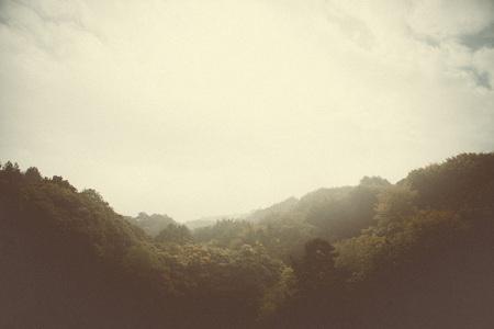 Photo pour woodland style images of trees and nature - image libre de droit
