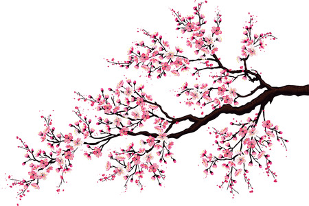 Illustration pour Branch of a blossoming cherry tree isolated on a white background - image libre de droit