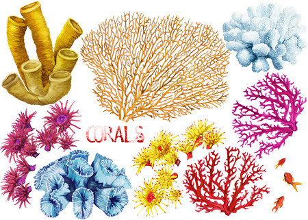 Watercolor hand drawn corals on a white background