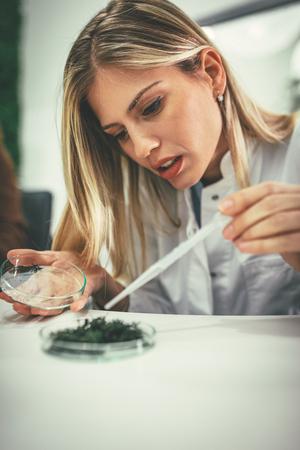 Foto de University female biologist analysing the sample of plant in the lab tube, watering it with drops of nutritious fluid. - Imagen libre de derechos