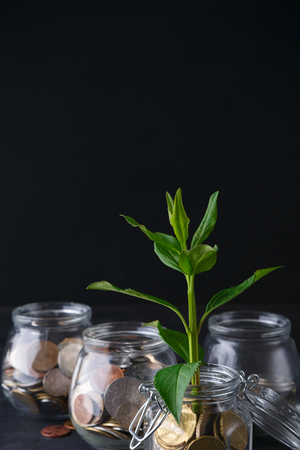 Foto de Plant growing on coins in glass jar. Increasing quantity of cash, startup, money growth concept - Imagen libre de derechos