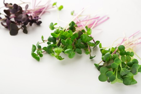 Foto de Micro greens variety isolated on white background, copy space. Assortment of baby, mockup for healthy eating and organic restaurant cooking advertisement - Imagen libre de derechos