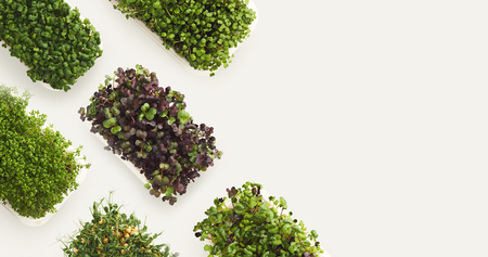 Photo for Growing micro greens isolated on white background, copy space, top view. Assortment of baby sprouts in plastic bowls, mockup for healthy eating and organic restaurant cooking advertisement - Royalty Free Image