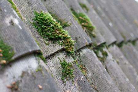 Foto de Texture of gray fiber asbestos roof sheets with green moss, closeup. Pattern of weathered old roof, rustic background - Imagen libre de derechos