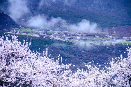 Photo pour Tibet Linzhi scenery - image libre de droit