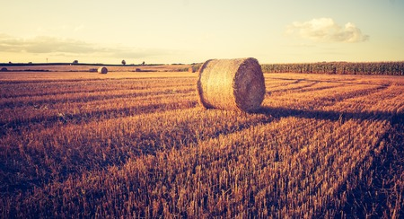 Photo for Beautiful field landscape with straw bales after harvest. Photo with vintage mood. Photographed in Poland. - Royalty Free Image