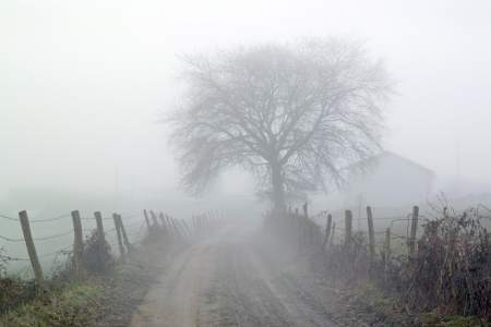 Photo pour countryside road with fog in the morning - image libre de droit
