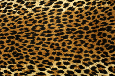Photo for Close up spots pattern of a leopard - Royalty Free Image
