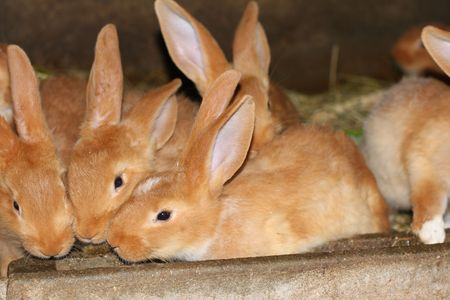 many young rabbits looking camera