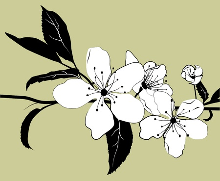 Flowering branch of cherry with a light green background. Illustration.