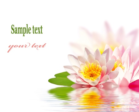 Photo for Pink lotus flower floating in water - Royalty Free Image