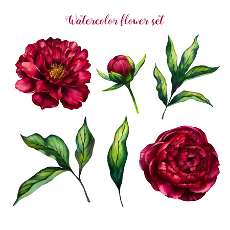Illustration for Watercolor flower peony, flowers and leaves peonies, watercolor rose isolated on white background, floral set, vector design for invitation, wedding, save the date, card, holiday, summer design - Royalty Free Image
