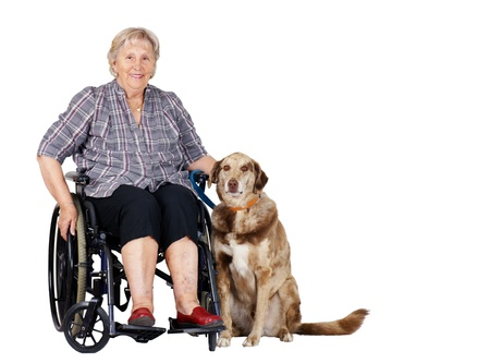 Happy senior woman in wheelchair with her big dog, great for zootherapy, guiding dogs or other health or medical issues