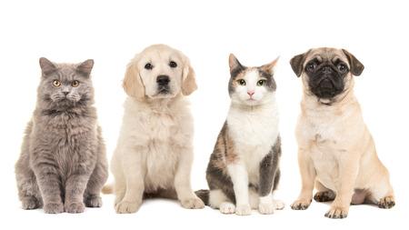 Foto de Group of pets, puppy dogs and adult cats on a white background - Imagen libre de derechos
