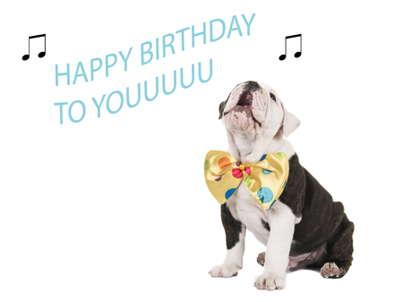 Foto de Cute english bulldog puppy sitting and singing happy birthday to you isolated on a white background - Imagen libre de derechos