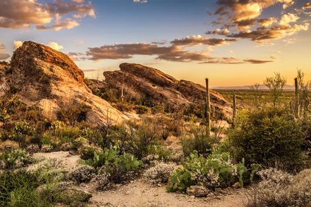 Foto de Sunset over Javelina Rocks in Saguaro National Park East near Tucson, Arizon - Imagen libre de derechos