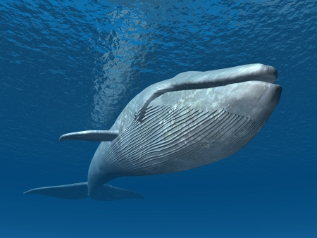 Photo for Blue Whale - Royalty Free Image