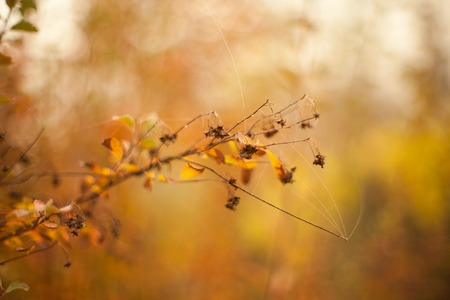 Photo for Autumn beech leaves decorate a beautiful nature bokeh background with forest - Royalty Free Image