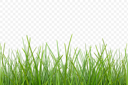 Illustration pour Green grass meadow border vector pattern. Spring or summer plant lawn. Photo realistic grass on a transparent background. - image libre de droit