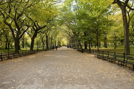 Photo for  Center Park NY . Beautiful park in beautiful city. - Royalty Free Image