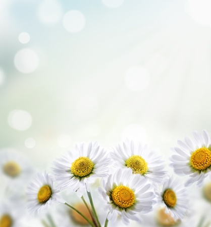 Daisy flower with beautiful spring bokeh