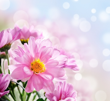 Photo for Closeup of beautiful pink flowers in the garden - Royalty Free Image
