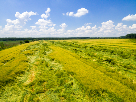 Photo pour Aerial view of wheat field. Rural nanture form above. - image libre de droit