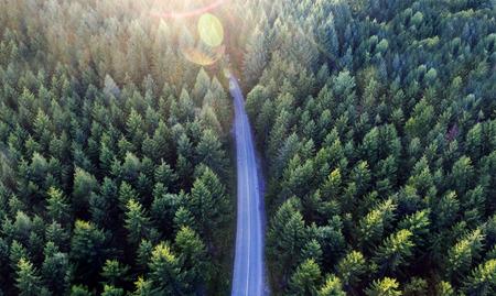 Foto de Top view of dark green forest landscape in winter. Aerial nature scene of pine trees and asphalt road. Countryside path trough coniferous wood form above. Adventure travel concept background. - Imagen libre de derechos