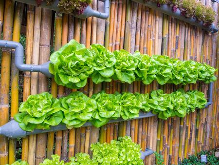 Foto de vegetable in decorated wall vertical garden Idea in the city - Imagen libre de derechos