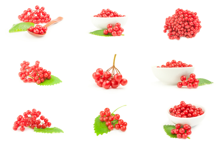 Set of viburnum berries isolated over a white background