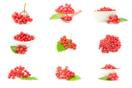Set of red berries of viburnum  isolated on a white background cutout