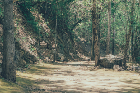 Photo for Forest path way landscape use for background., vintage style., Way to moutain. - Royalty Free Image