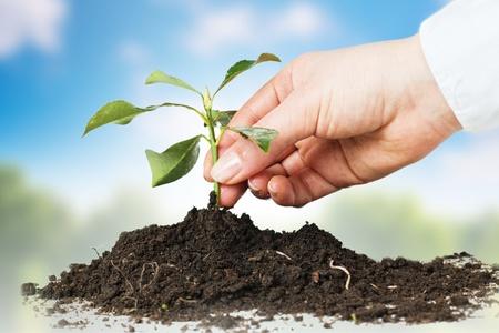 Foto de Human hands giving support to a small plant over nature background. - Imagen libre de derechos